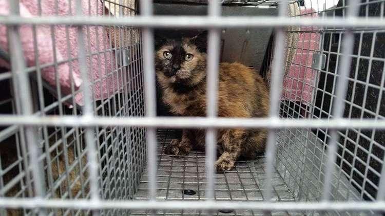 RSR Cats Community Initiative