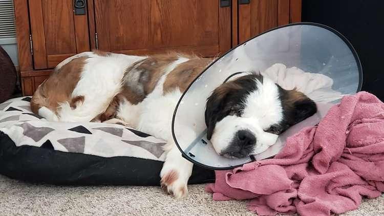 Tesha sleeping with cone