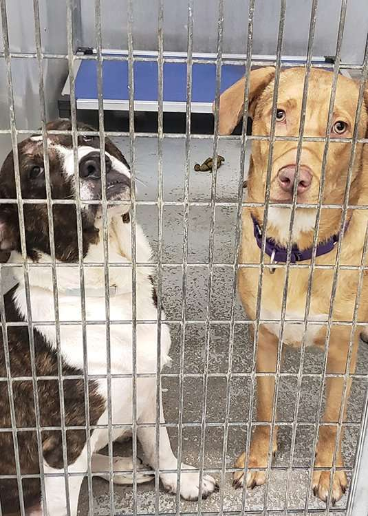 Shelter dogs in Texas