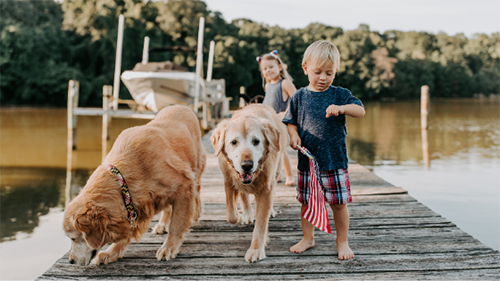 Two children on a dock with two golden retrievers