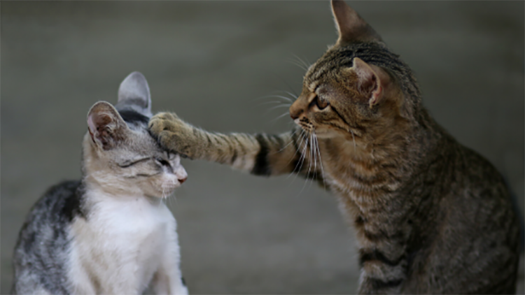 Preventing cat fights