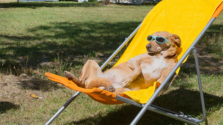 Dog lounging in chair with sunglasses