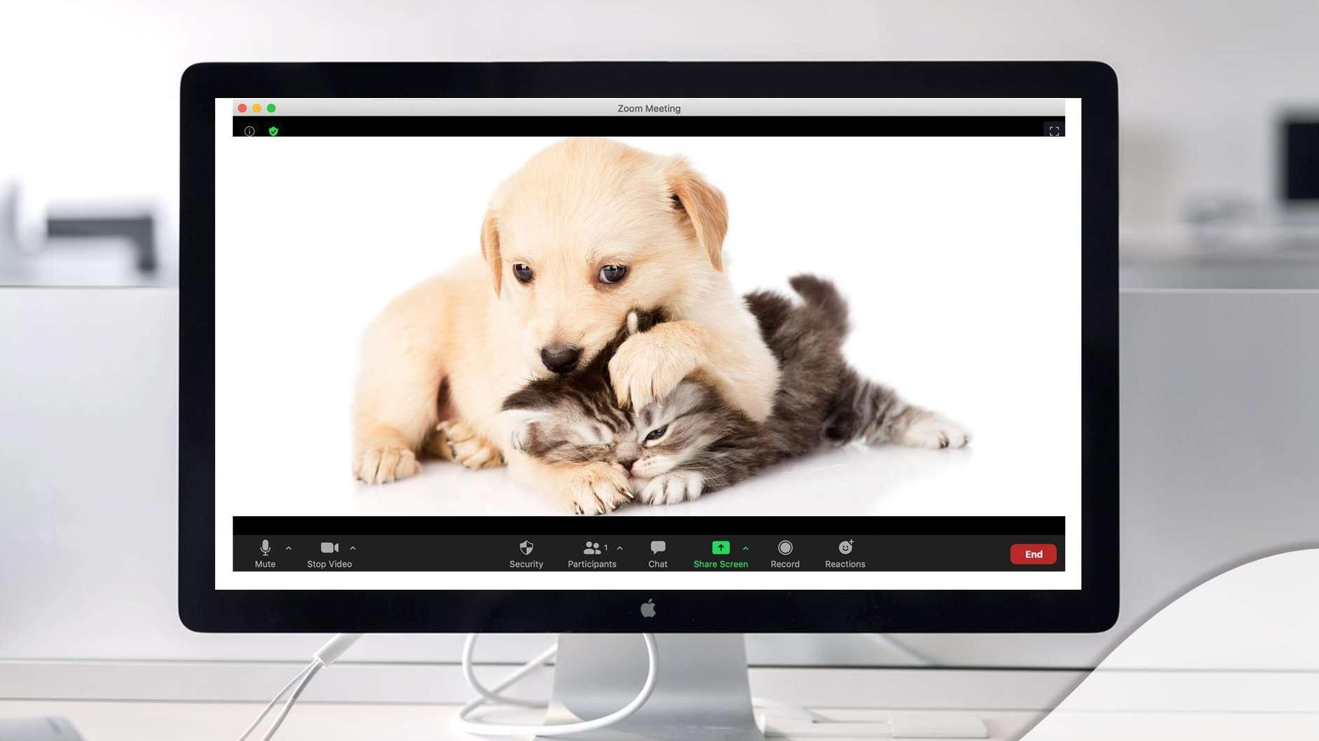 Virtual puppy & kitten