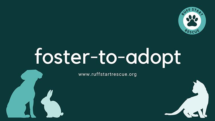 Foster-to-Adopt Program
