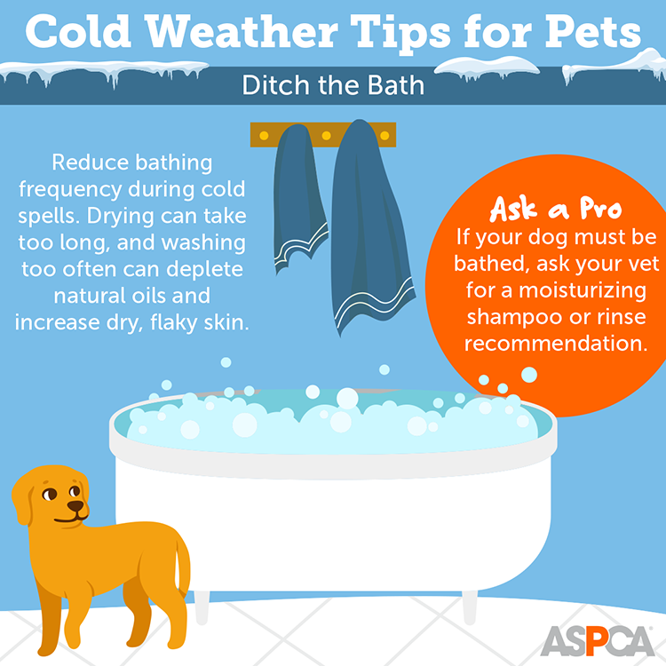 Cold Weather Tips for Pets: Ditch the Bath