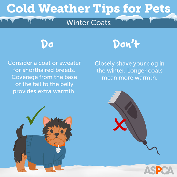 Cold Weather Tips for Pets: Do's and Don'ts