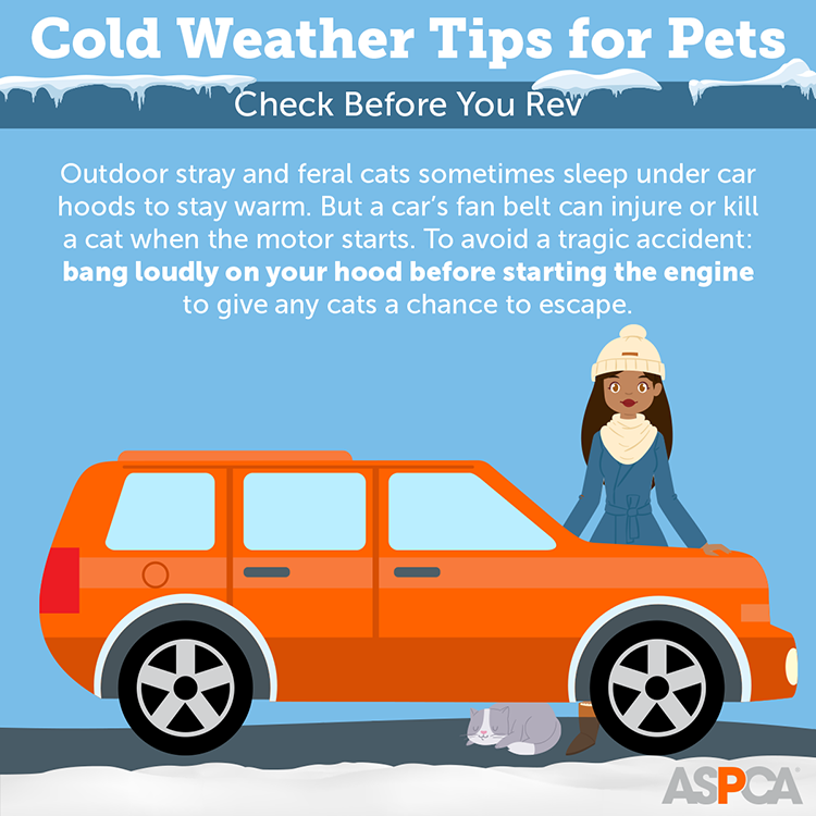 Cold Weather Tips for Pets: Check before you rev