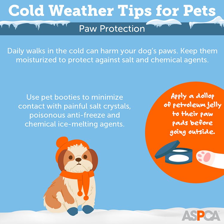 Cold Weather Tips for Pets: Paw Protection