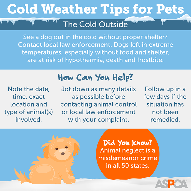 Cold Weather Tips for Pets: The Cold Outside