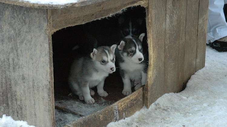 Two puppies in an outdoor dog house