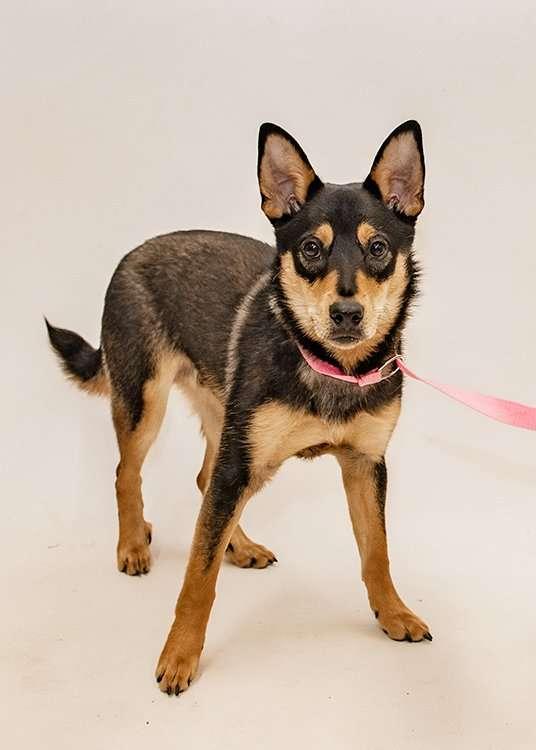 Ruff Start Rescue dog heartworm survivor