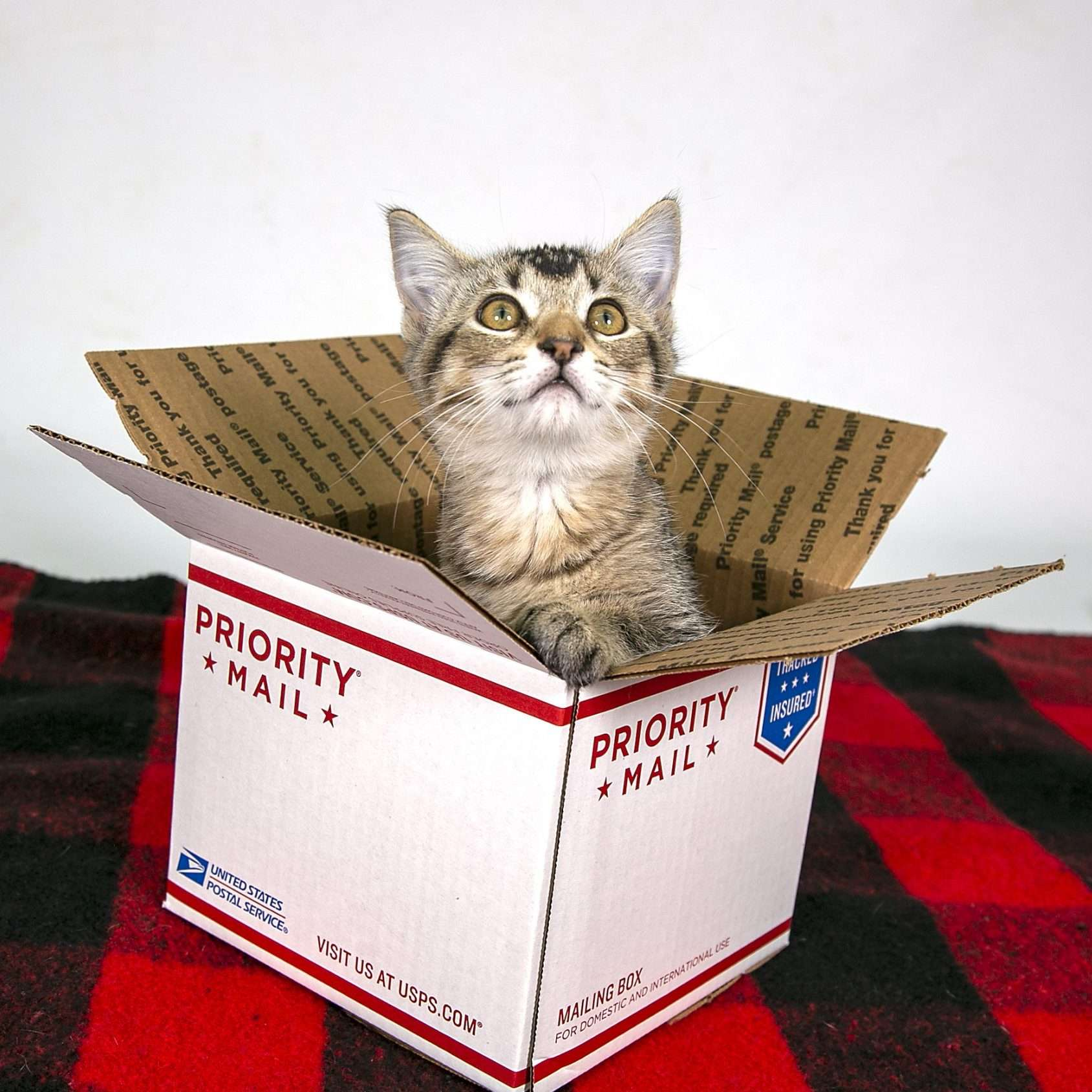 A kitten pops out of a priority mail box