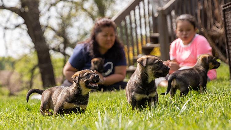 Debunking Animal Rescue Myths