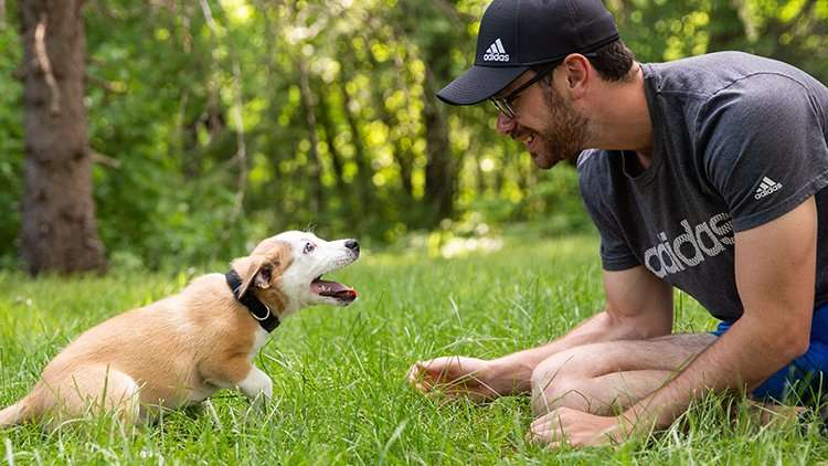 Puppy playing with man outside
