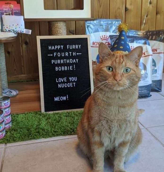 Orange cat sits in front of donations and a sign that states it is his fourth birthday