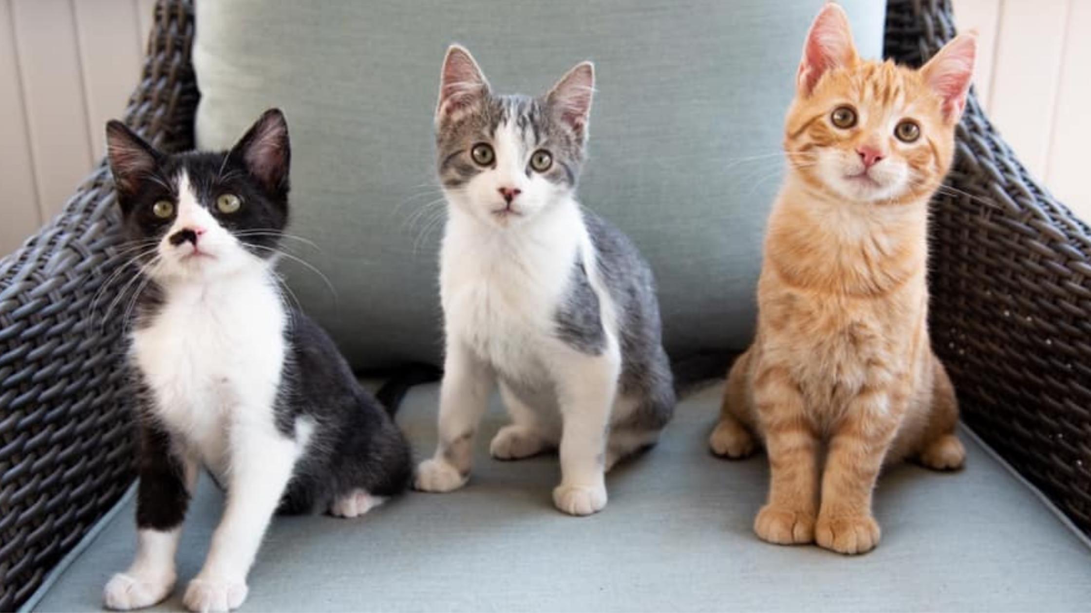 three kittens sitting on a chair