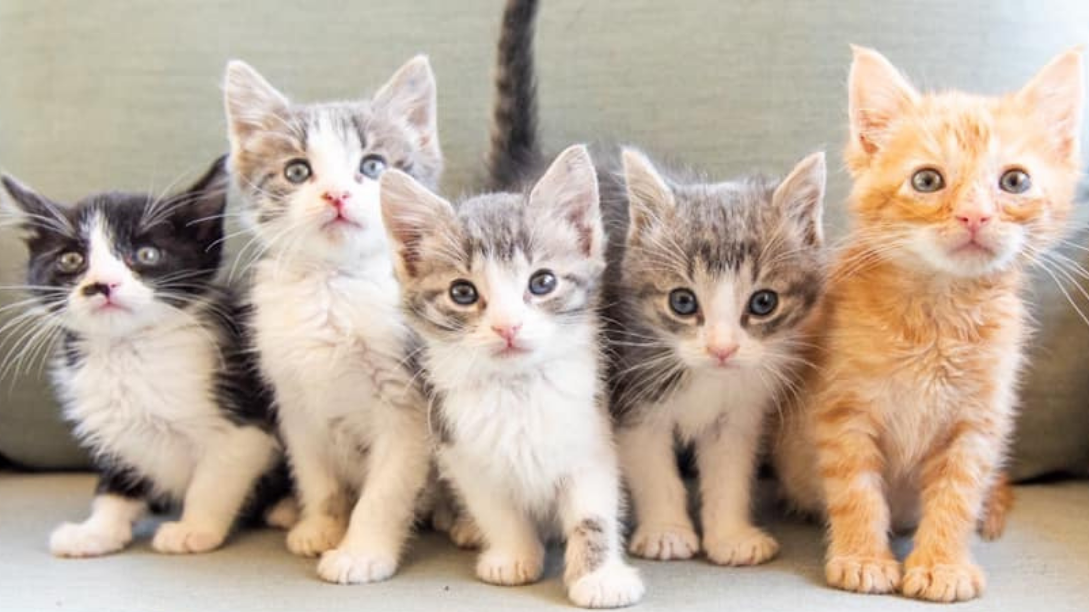 five kittens sitting on a couch