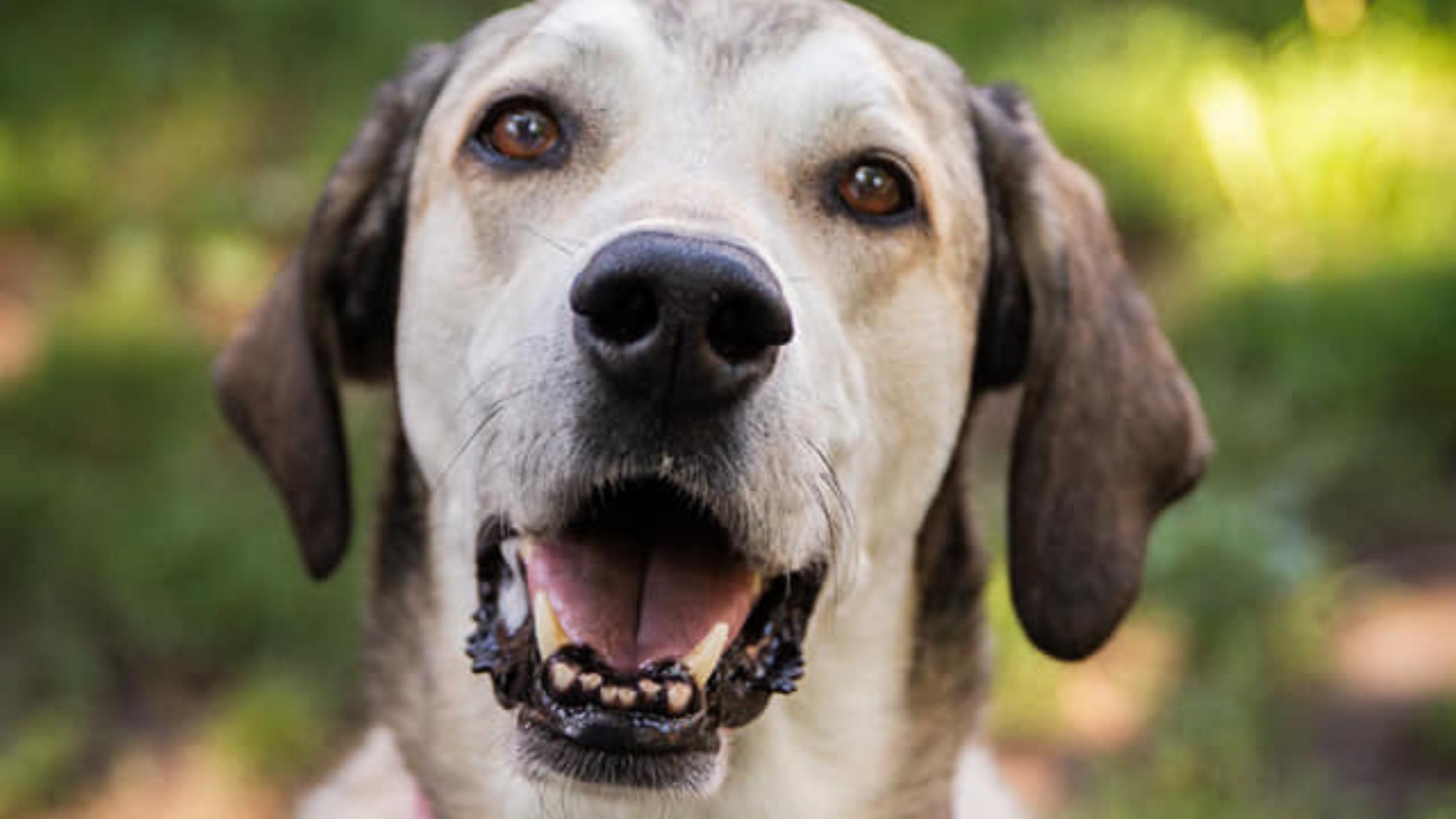 a dog smiling at the camera